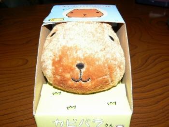 002kapibara