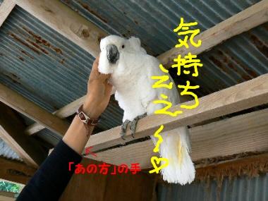 011shibukawapoppo01