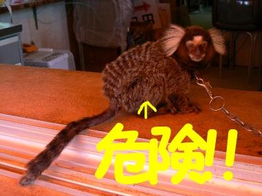 012shibukawakomon02