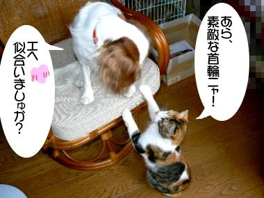 Kubiwa4