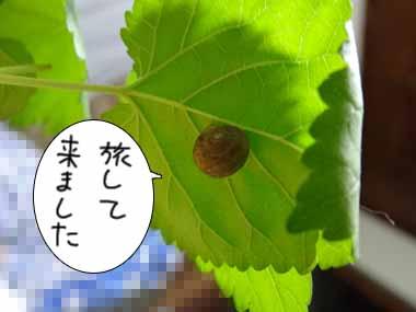 Katatsumuri_2