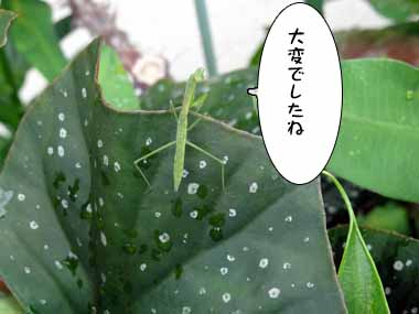 Tsumujikaze_<br /> 5