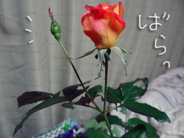 Mushi_1