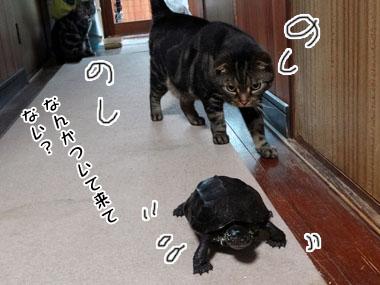 Chibiratonekora_2