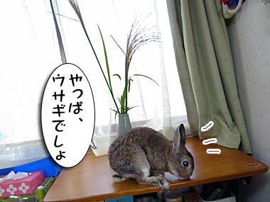 Tsukitousagi_2