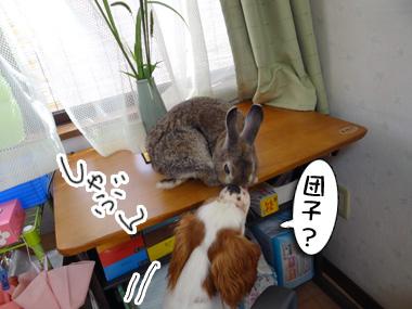 Tsukitousagi_3