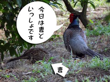 Kijifufu_1