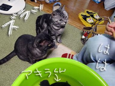 Yutori_1
