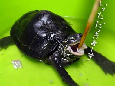 Yutori_4
