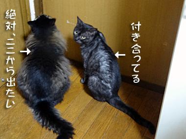 Tsukiai_2