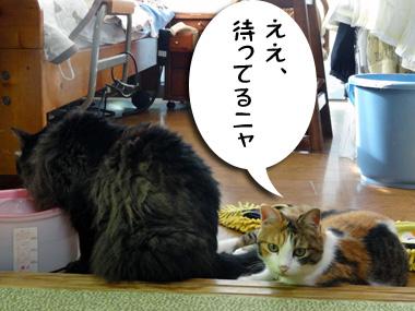 Matsu_2