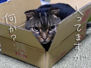 Kubiwa_3