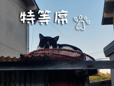 Shirokuro_1