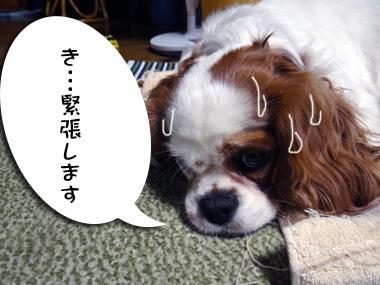 Kiseki_3
