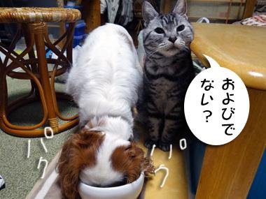 Tsukisoi_2