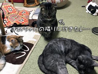 Dokidoki_1