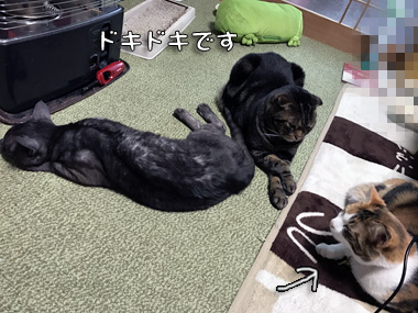 Dokidoki_3