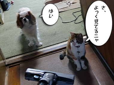 Shinan_1