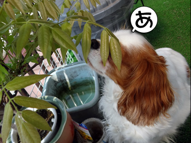 Shokudo_3