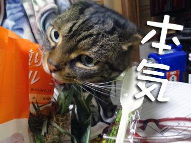 Toumorokoshi_3