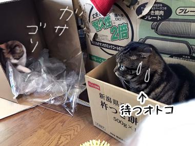 Hako_4
