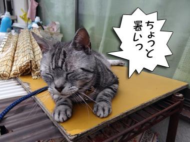 Shitugaiki_1
