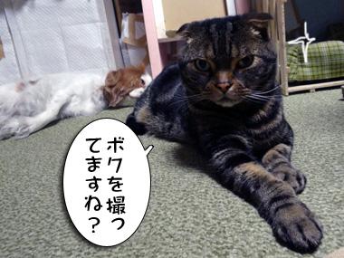Ushiro_1