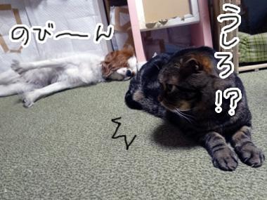 Ushiro_2