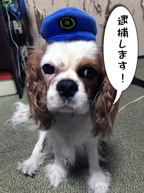 Omawarisan_3