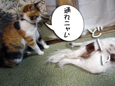 Kiseki_1