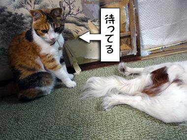 Kiseki_2