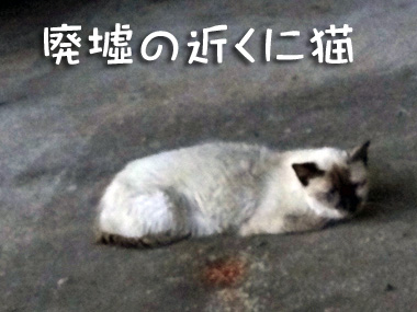 Haikyo_3