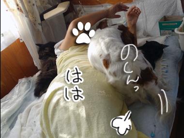 Hahaokoshi_1