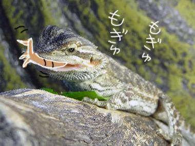 Kourogi_2