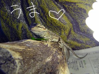 Kourogi_3