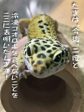 Tama_1
