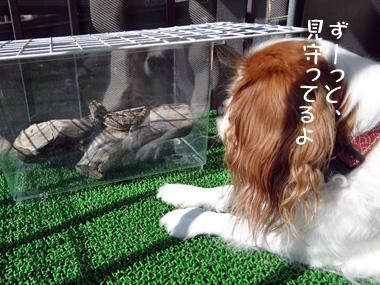 Hinatabokko_1