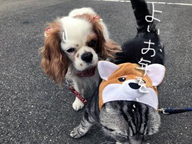 Inu_3