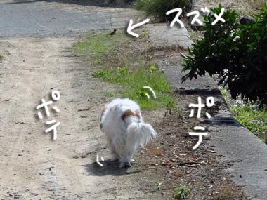Suzume_1