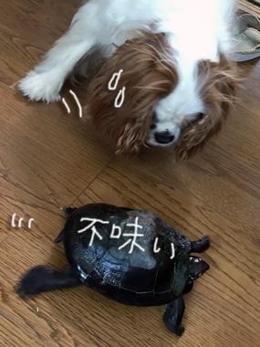 Akirakun_4