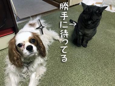 Matsu_1