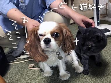 Yujin_2
