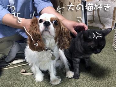 Yujin_3