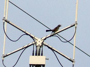 Bird049