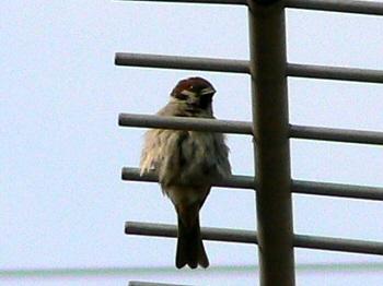 Bird050